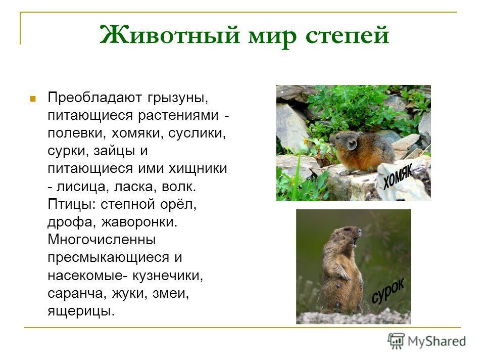 Животный мир степей Преобладают грызуны, питающиеся растениями - полевки, хомяки, суслики, сурки, зайцы и питающиеся ими хищники - лисица, ласка, волк. Птицы: степной орёл, дрофа, жаворонки. Многочисленны пресмыкающиеся и насекомые- кузнечики, саранч