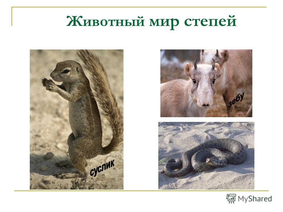 Животный мир степей