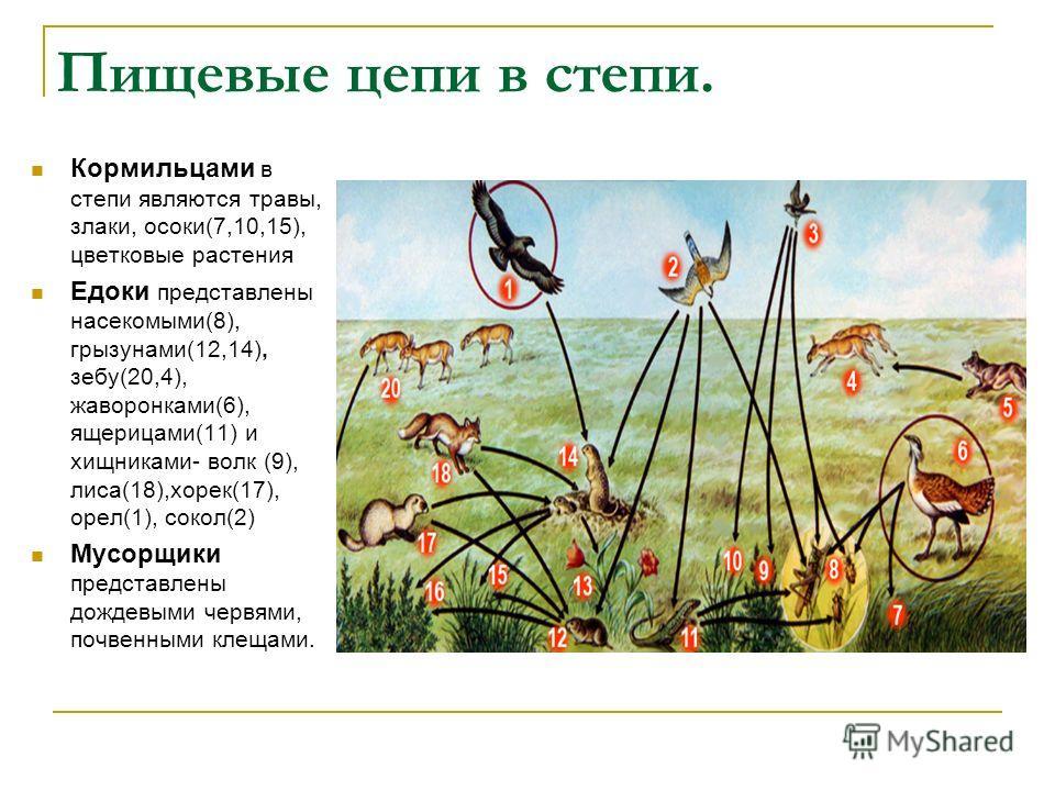 Пищевые цепи в степи. Кормильцами в степи являются травы, злаки, осоки(7,10,15), цветковые растения Едоки представлены насекомыми(8), грызунами(12,14), зебу(20,4), жаворонками(6), ящерицами(11) и хищниками- волк (9), лиса(18),хорек(17), орел(1), соко