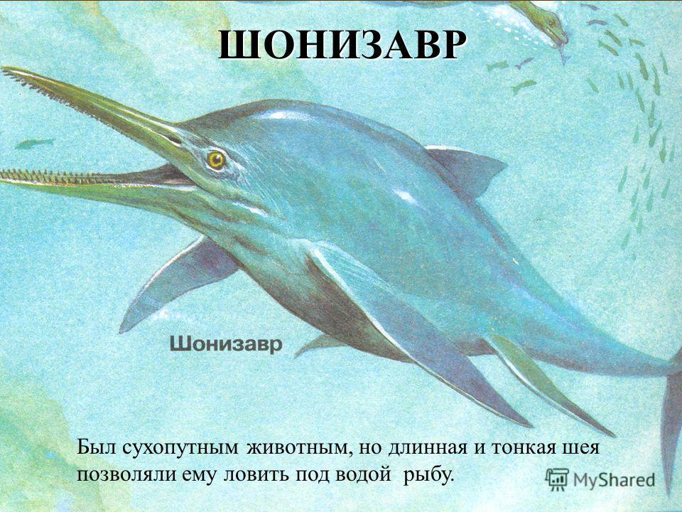 ШОНИЗАВР Был сухопутным животным, но длинная и тонкая шея позволяли ему ловить под водой рыбу.