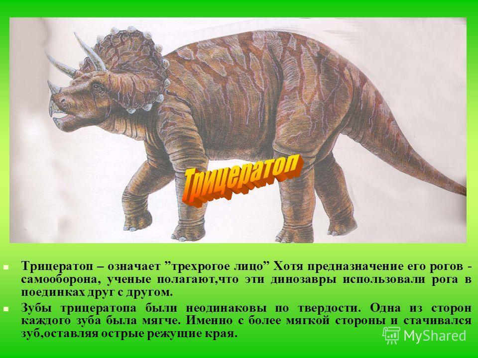 Трицератоп – означает трехрогое лицо Хотя предназначение его рогов - самооборона, ученые полагают,что эти динозавры использовали рога в поединках друг с другом. Зубы трицератопа были неодинаковы по твердости. Одна из сторон каждого зуба была мягче. И