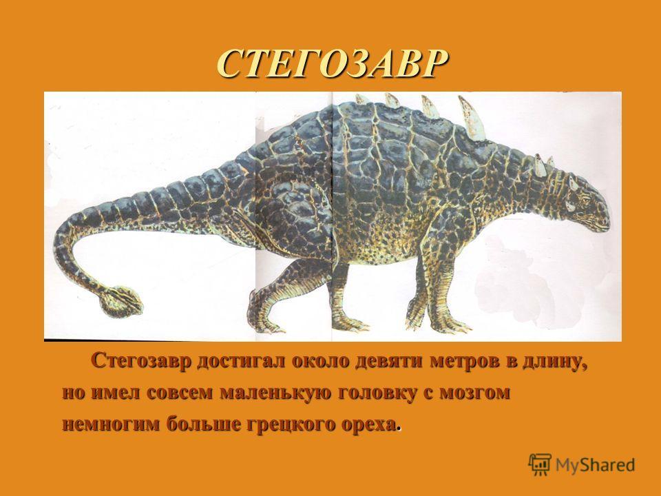 СТЕГОЗАВР Стегозавр достигал около девяти метров в длину, но имел совсем маленькую головку с мозгом немногим больше грецкого ореха.
