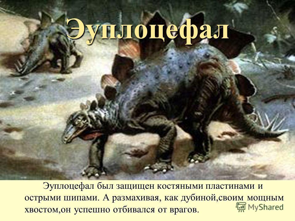 Эуплоцефал Эуплоцефал был защищен костяными пластинами и острыми шипами. А размахивая, как дубиной,своим мощным хвостом,он успешно отбивался от врагов.