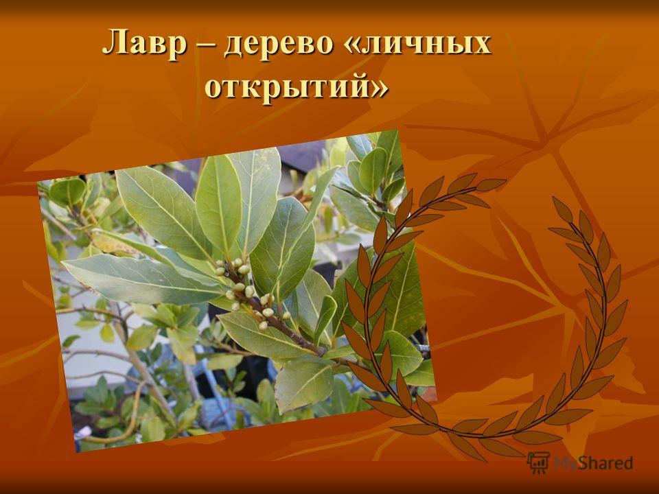Лавр – дерево «личных открытий»