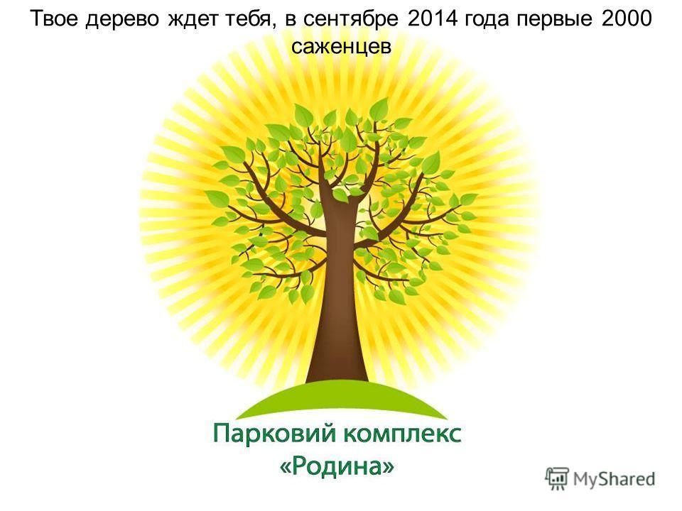 Твое дерево ждет тебя, в сентябре 2014 года первые 2000 саженцев