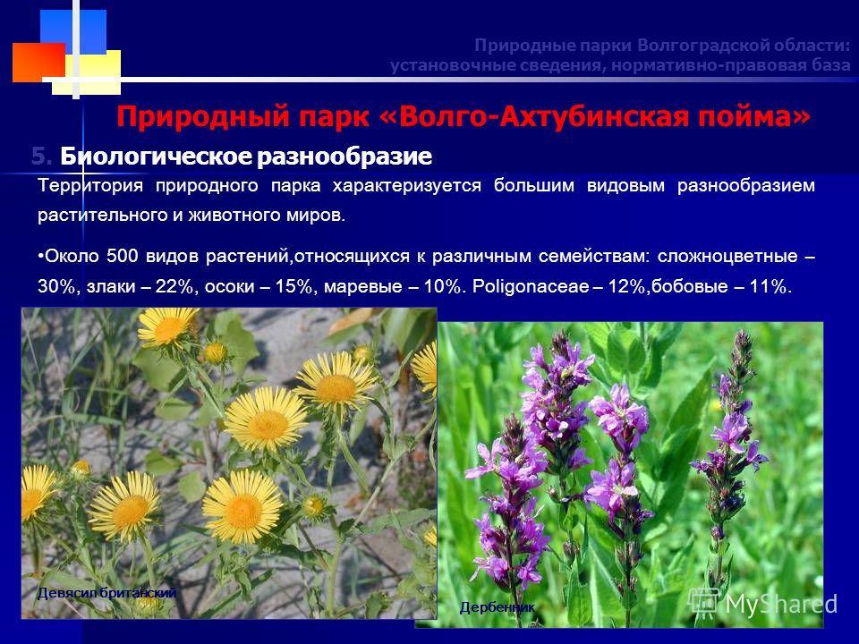 Природные парки Волгоградской области: установочные сведения, нормативно-правовая база Природный парк «Волго-Ахтубинская пойма» Территория природного парка характеризуется большим видовым разнообразием растительного и животного миров. Около 500 видов