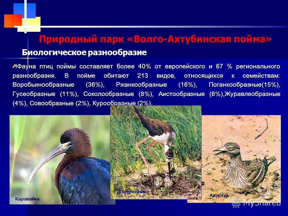 Природный парк «Волго-Ахтубинская пойма» Биологическое разнообразие Фауна птиц поймы составляет более 40% от европейского и 67 % регионального разнообразия. В пойме обитают 213 видов, относящихся к семействам: Воробьинообразные (36%), Ржанкообразные