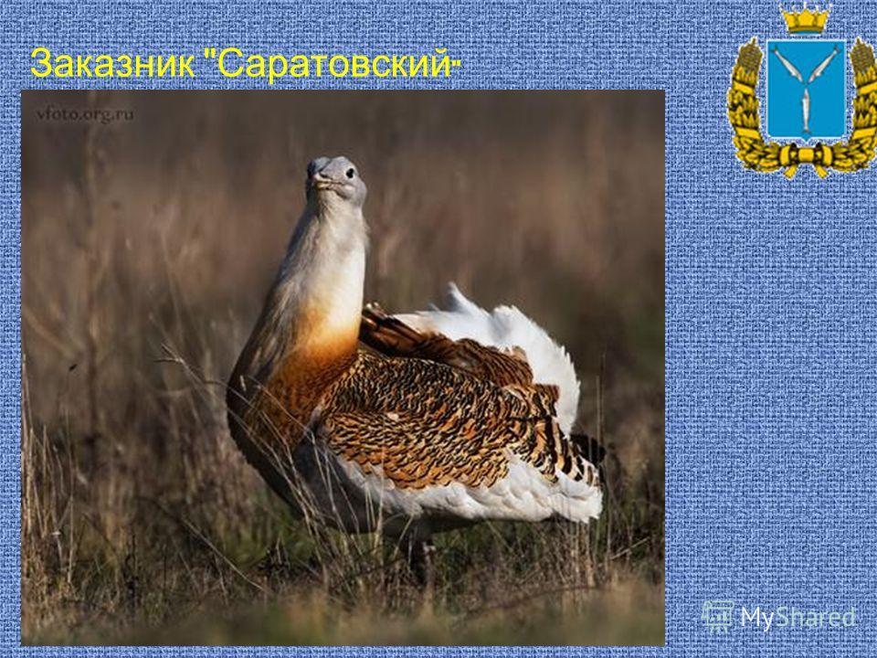 Заказник Саратовский