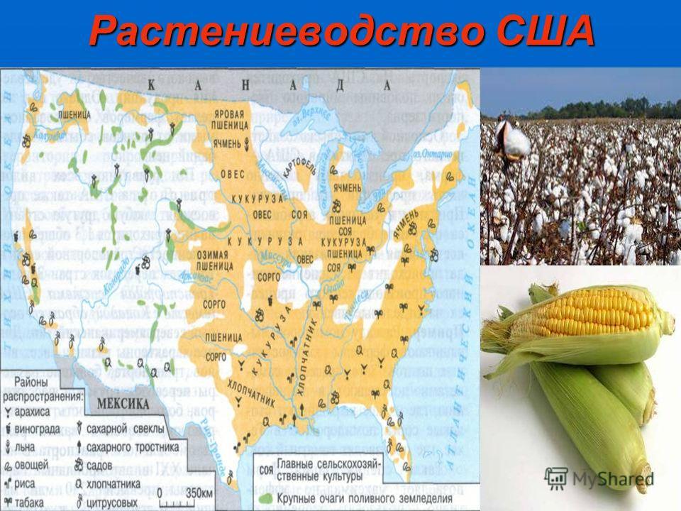 Растениеводство США