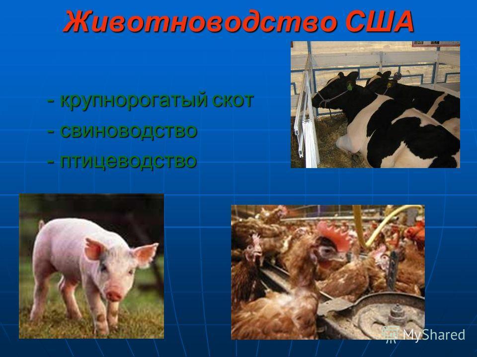 Животноводство США - крупнорогатый скот - свиноводство - птицеводство