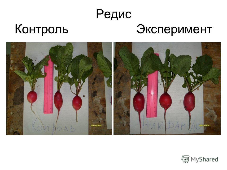 Редис Контроль Эксперимент