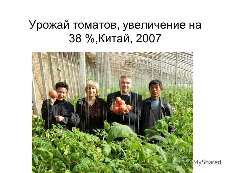 Урожай томатов, увеличение на 38 %,Китай, 2007
