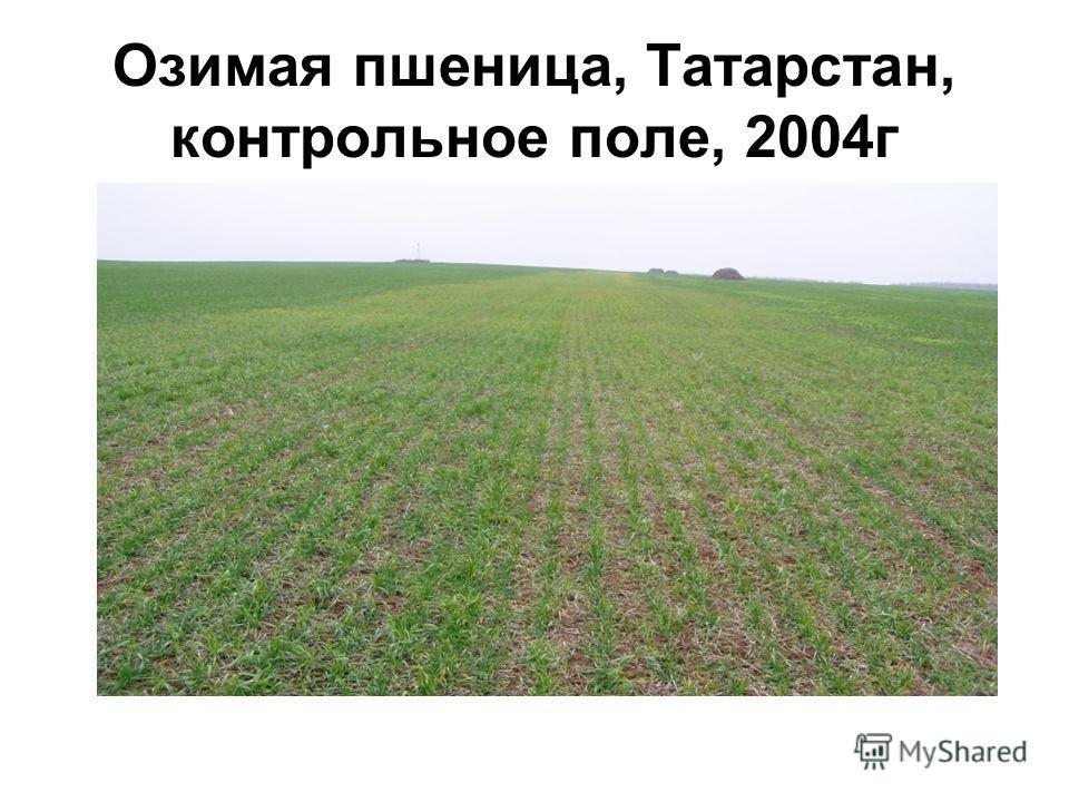 Озимая пшеница, Татарстан, контрольное поле, 2004 г