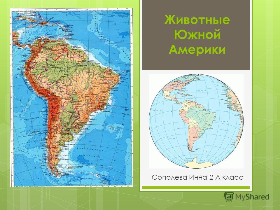 Животные Южной Америки Сополева Инна 2 А класс