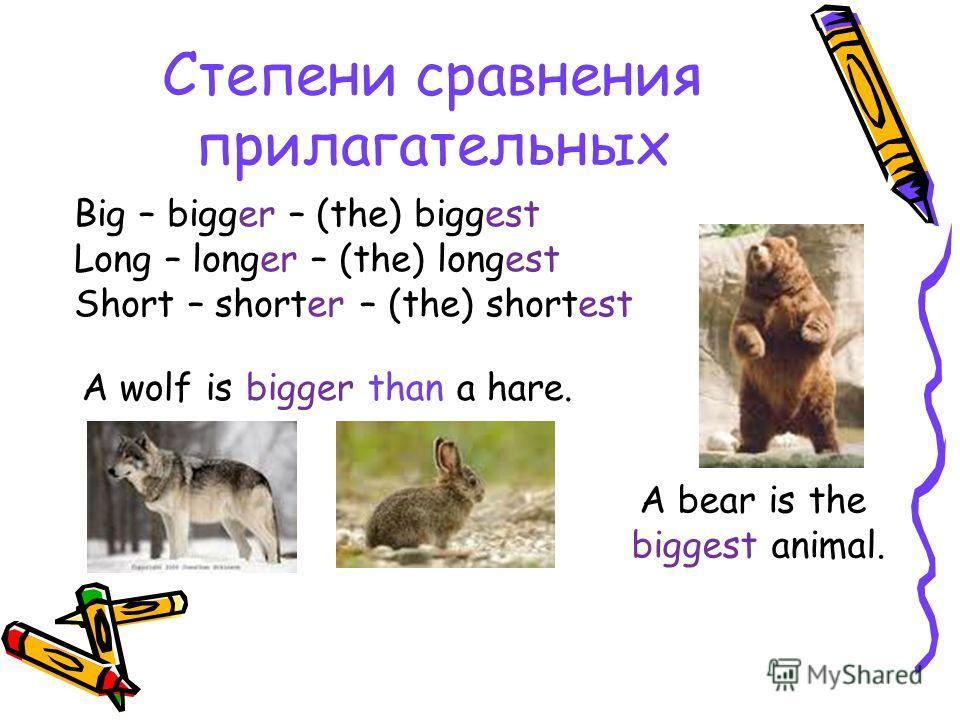 Что вы можете сказать об этих парах животных?