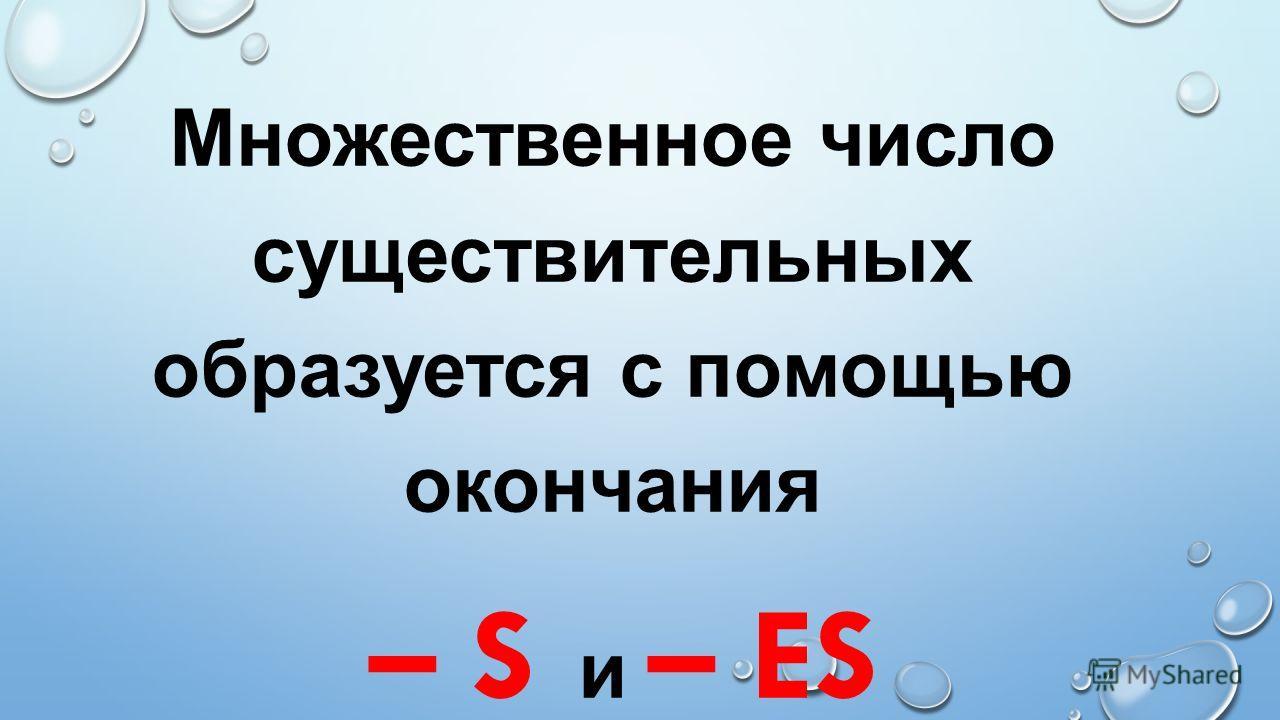 Множественное число существительных образуется с помощью окончания – S и – ES