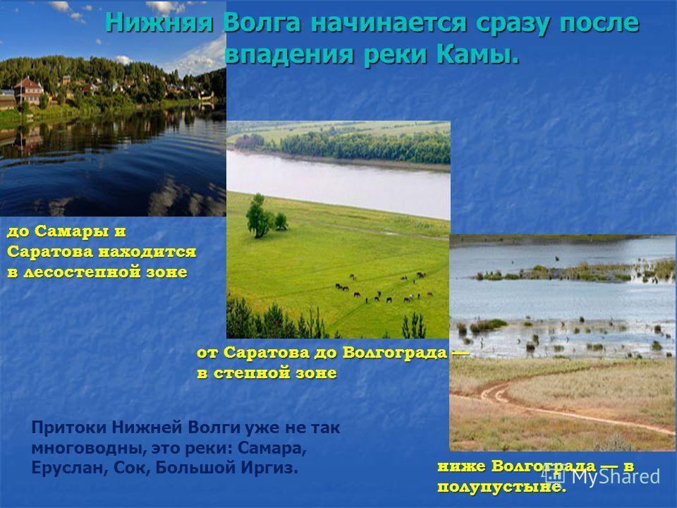 Притоки Нижней Волги уже не так многоводны, это реки: Самара, Еруслан, Сок, Большой Иргиз. ниже Волгограда в полупустыне. от Саратова до Волгограда в степной зоне Нижняя Волга начинается сразу после впадения реки Камы. до Самары и Саратова находится