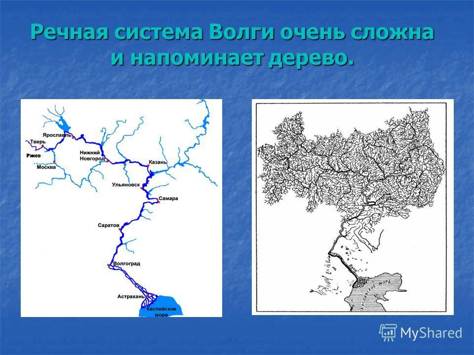 Речная система Волги очень сложна и напоминает дерево.