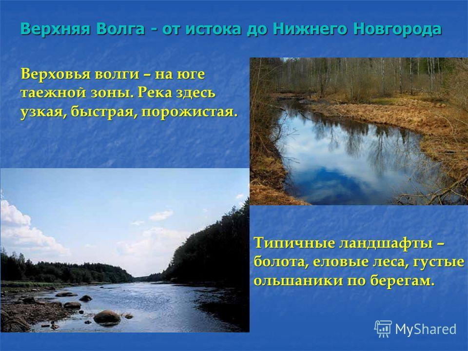 Верховья волги – на юге таежной зоны. Река здесь узкая, быстрая, порожистая. Типичные ландшафты – болота, еловые леса, густые ольшаники по берегам. Верхняя Волга - от истока до Нижнего Новгорода