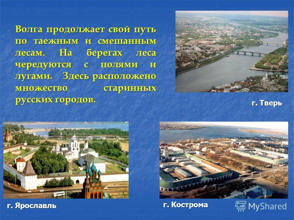 г. Тверь г. Ярославль г. Кострома Волга продолжает свой путь по таежным и смешанным лесам. На берегах леса чередуются с полями и лугами. Здесь расположено множество старинных русских городов.