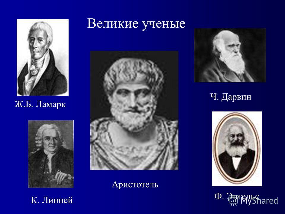 Великие ученые Аристотель Ч. Дарвин Ф. Энгельс К. Линней Ж.Б. Ламарк