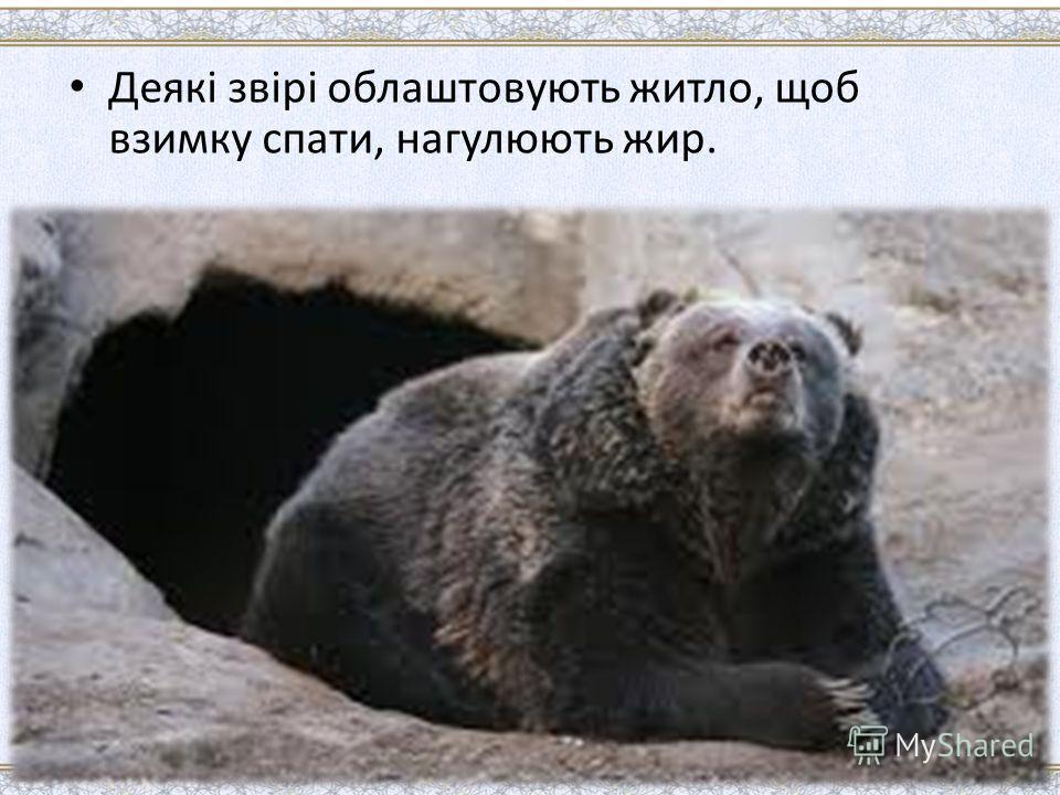 Деякі звірі облаштовують житло, щоб взимку спати, нагулюють жир.