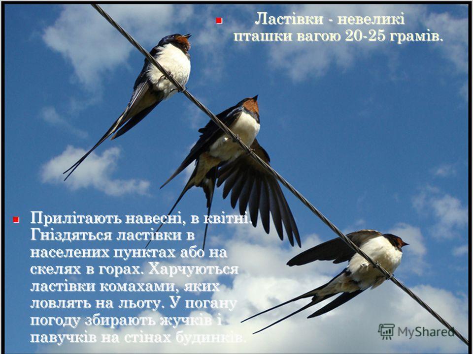 Картинки приліт птахів весною