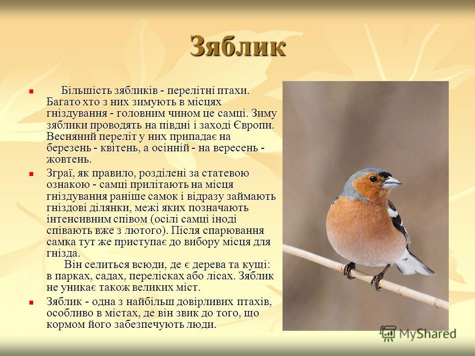 Зяблик Більшість зябликів - перелітні птахи. Багато хто з них зимують в місцях гніздування - головним чином це самці. Зиму зяблики проводять на півдні і заході Європи. Весняний переліт у них припадає на березень - квітень, а осінній - на вересень - ж
