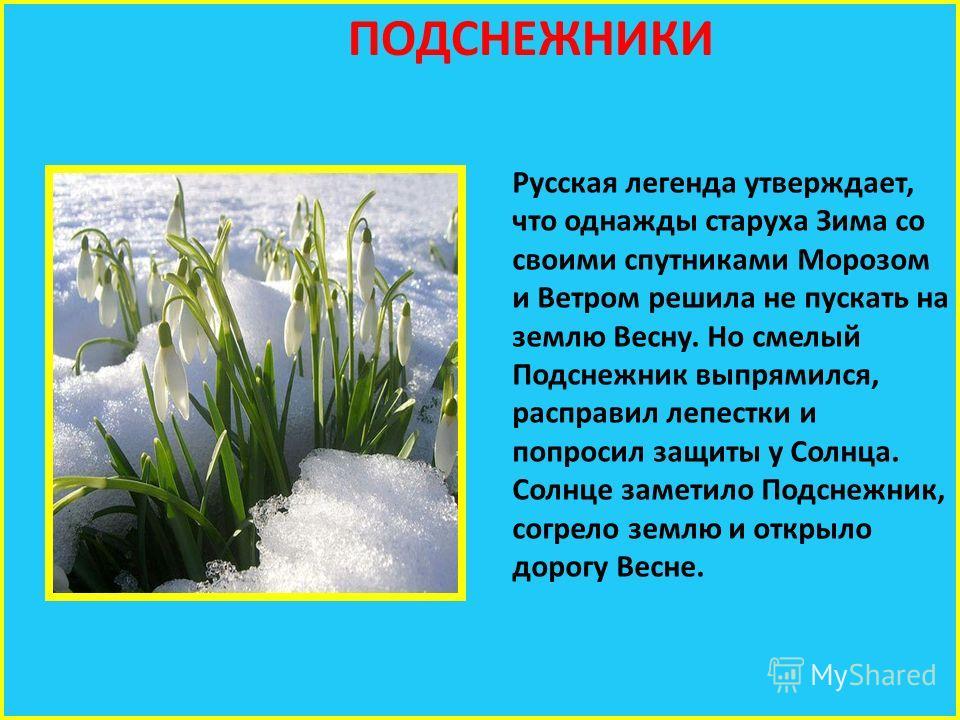 ПОДСНЕЖНИКИ Русская легенда утверждает, что однажды старуха Зима со своими спутниками Морозом и Ветром решила не пускать на землю Весну. Но смелый Подснежник выпрямился, расправил лепестки и попросил защиты у Солнца. Солнце заметило Подснежник, согре
