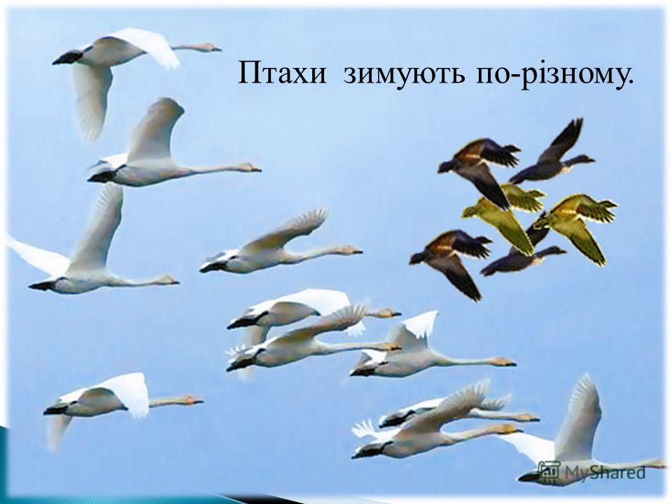 Птахи зимують по-різному.