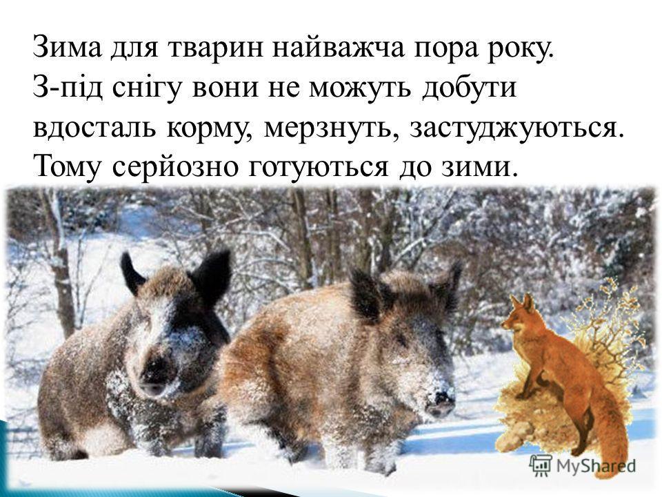 Зима для тварин найважча пора року. З-під снігу вони не можуть добути вдосталь корму, мерзнуть, застуджуються. Тому серйозно готуються до зими.
