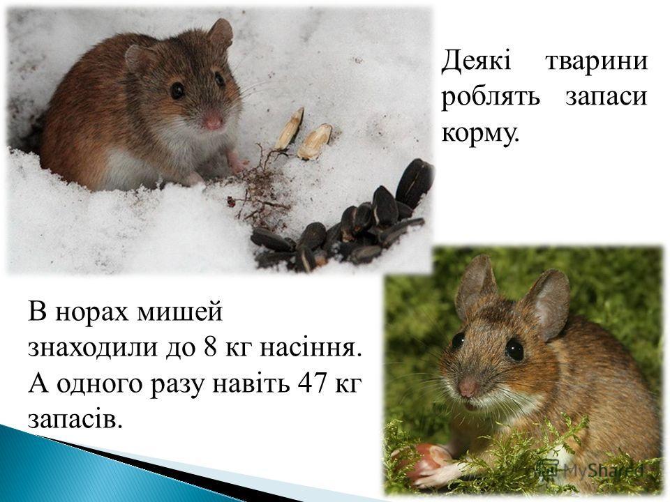 Деякі тварини роблять запаси корму. В норах мишей знаходили до 8 кг насіння. А одного разу навіть 47 кг запасів.
