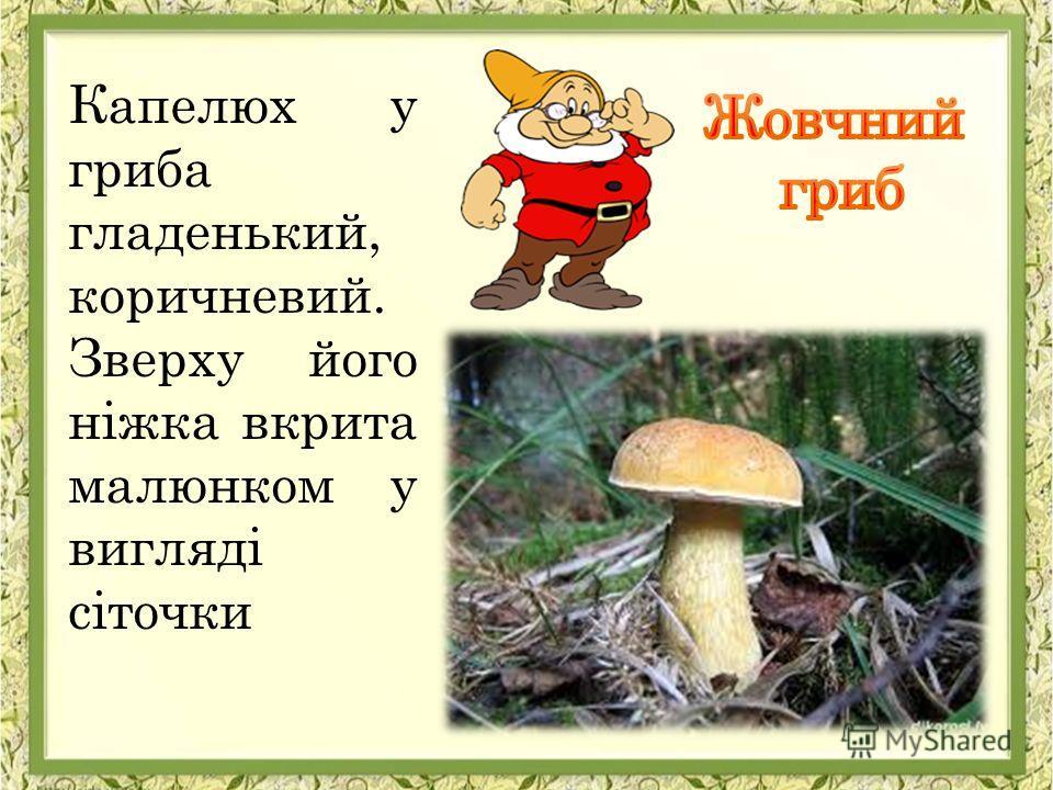 Капелюх у гриба гладенький, коричневий. Зверху його ніжка вкрита малюнком у вигляді сіточки