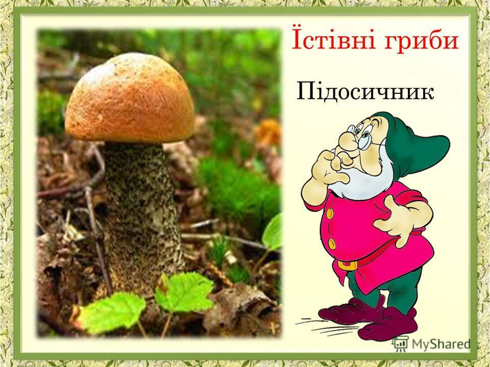 Підосичник Їстівні гриби