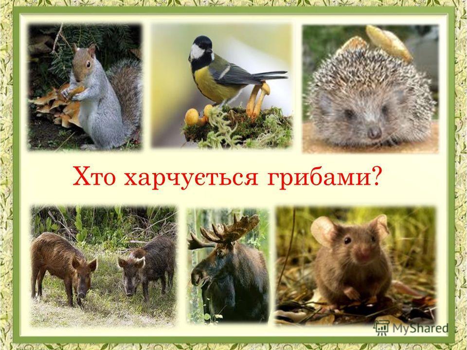 Хто харчується грибами?