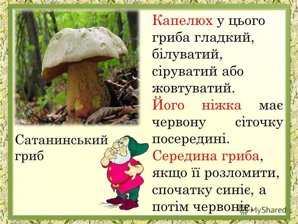 Капелюх у цього гриба гладкий, білуватий, сіруватий або жовтуватий. Його ніжка має червону сіточку посередині. Середина гриба, якщо її розломити, спочатку синіє, а потім червоніє. Сатанинський гриб