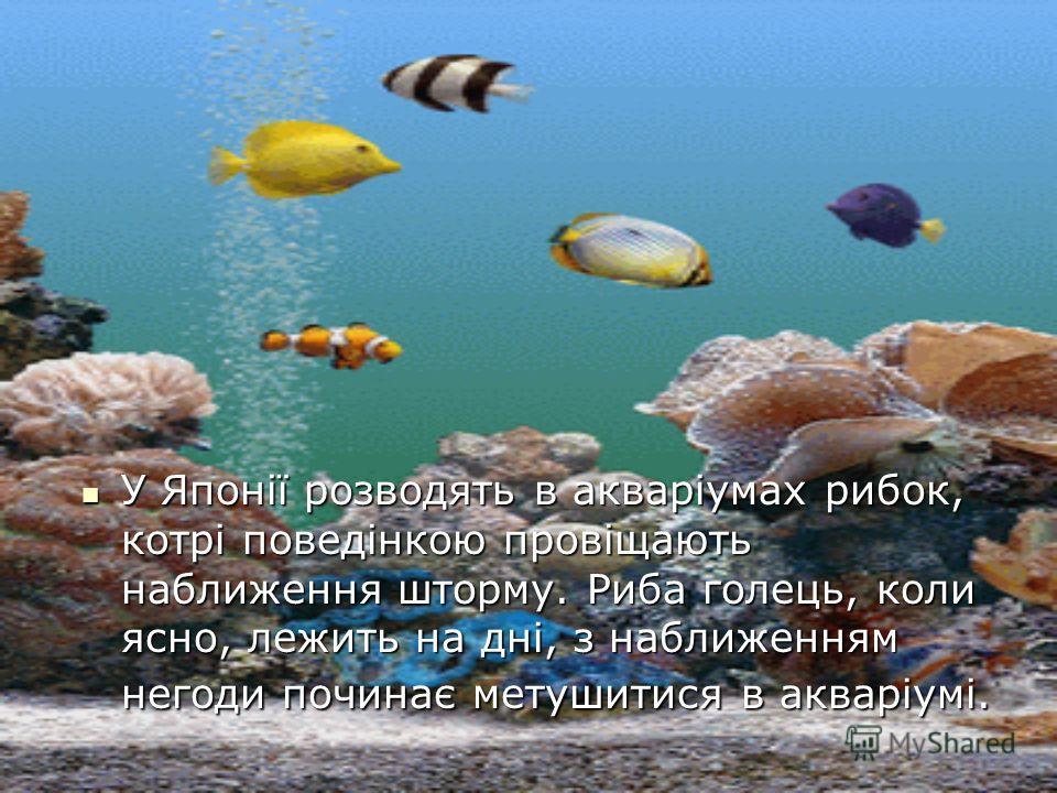 У Японії розводять в акваріумах рибок, котрі поведінкою провіщають наближення шторму. Риба голець, коли ясно, лежить на дні, з наближенням негоди починає метушитися в акваріумі. У Японії розводять в акваріумах рибок, котрі поведінкою провіщають набли