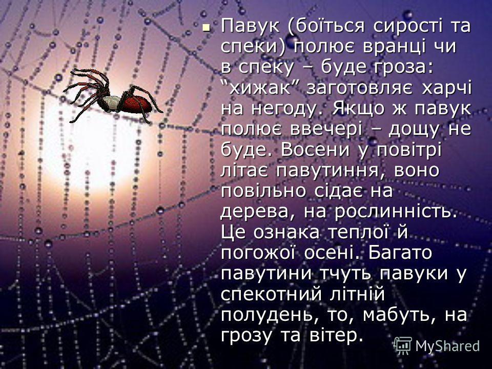 Павук (боїться сирості та спеки) полює вранці чи в спеку – буде гроза: хижак заготовляє харчі на негоду. Якщо ж павук полює ввечері – дощу не буде. Восени у повітрі літає павутиння, воно повільно сідає на дерева, на рослинність. Це ознака теплої й по