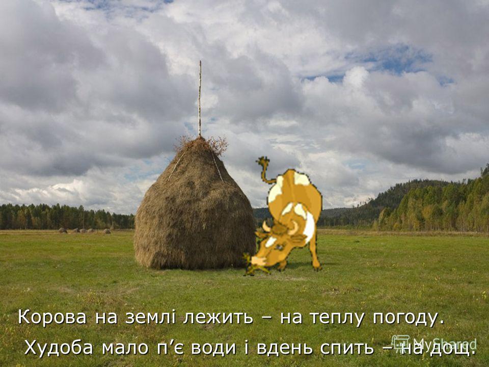 Коренюк Корова на землі лежить – на теплу погоду. Худоба мало пє води і вдень спить – на дощ. Худоба мало пє води і вдень спить – на дощ.