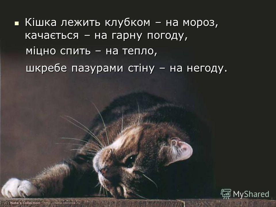 Кішка лежить клубком – на мороз, качається – на гарну погоду, Кішка лежить клубком – на мороз, качається – на гарну погоду, міцно спить – на тепло, міцно спить – на тепло, шкребе пазурами стіну – на негоду. шкребе пазурами стіну – на негоду.