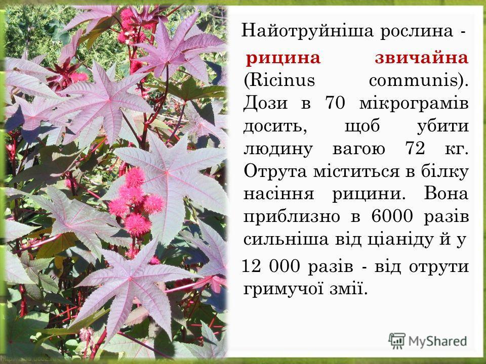 Найотруйніша рослина - рицина звичайна (Ricinus communis). Дози в 70 мікрограмів досить, щоб убити людину вагою 72 кг. Отрута міститься в білку насіння рицини. Вона приблизно в 6000 разів сильніша від ціаніду й у 12 000 разів - від отрути гримучої зм