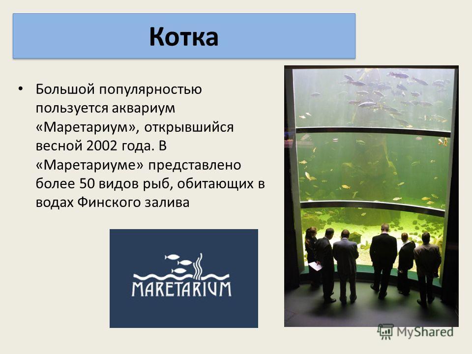 Большой популярностью пользуется аквариум «Маретариум», открывшийся весной 2002 года. В «Маретариуме» представлено более 50 видов рыб, обитающих в водах Финского залива Котка