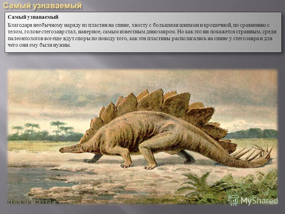 Самый узнаваемый Благодаря необычному наряду из пластин на спине, хвосту с большими шипами и крошечной, по сравнению с телом, голове стегозавр стал, наверное, самым известным динозавром. Но как это ни покажется странным, среди палеонтологов все еще в