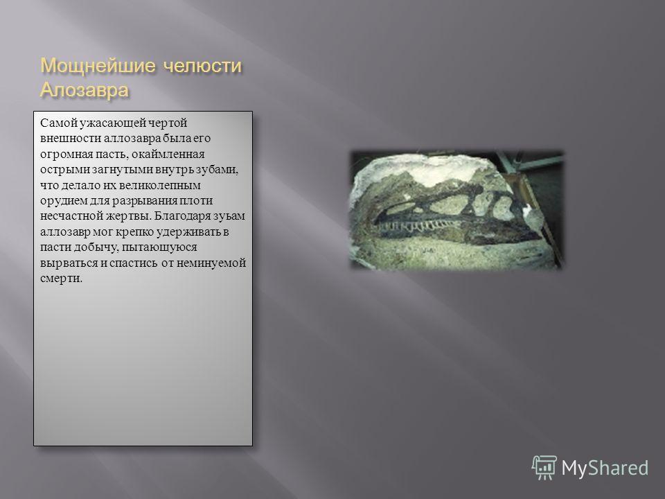 Мощнейшие челюсти Алозавра Самой ужасающей чертой внешности аллозавра была его огромная пасть, окаймленная острыми загнутыми внутрь зубами, что делало их великолепным орудием для разрывания плоти несчастной жертвы. Благодаря зуьам аллозавр мог крепко