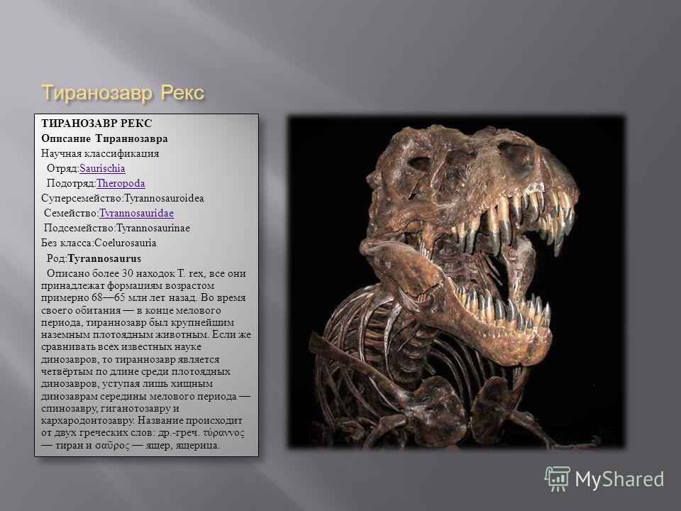 Тиранозавр Рекс ТИРАНОЗАВР РЕКС Описание Тираннозавра Научная классификация Отряд:SaurischiaSaurischia Подотряд:Theropoda Theropoda Суперсемейство:Tyrannosauroidea Семейство:Tyrannosauridae Tyrannosauridae Подсемейство:Tyrannosaurinae Без класса:Coel