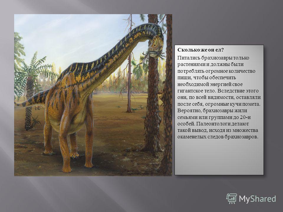 Сколько же он ел ? Питались брахиозавры только растениями и должны были потреблять огромное количество пищи, чтобы обеспечить необходимой энергией свое гигантское тело. Вследствие этого они, по всей видимости, оставляли после себя, огромные кучи поме