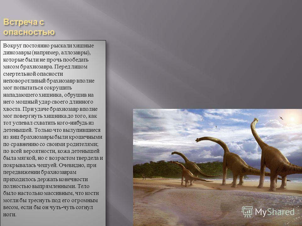 Встреча с опасностью Вокруг постоянно рыскали хищные динозавры (например, аллозавры), которые были не прочь пообедать мясом брахиозавра. Перед лицом смертельной опасности неповоротливый брахиозавр вполне мог попытаться сокрушить нападающего хищника,