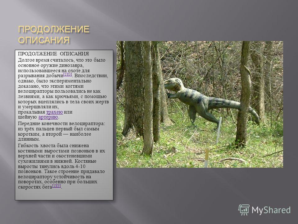 ПРОДОЛЖЕНИЕ ОПИСАНИЯ Долгое время считалось, что это было основное оружие динозавра, использовавшееся на охоте для разрывания добычи [1][3]. Впоследствии, однако, было экспериментально доказано, что этими когтями велоцирапторы пользовались не как лез