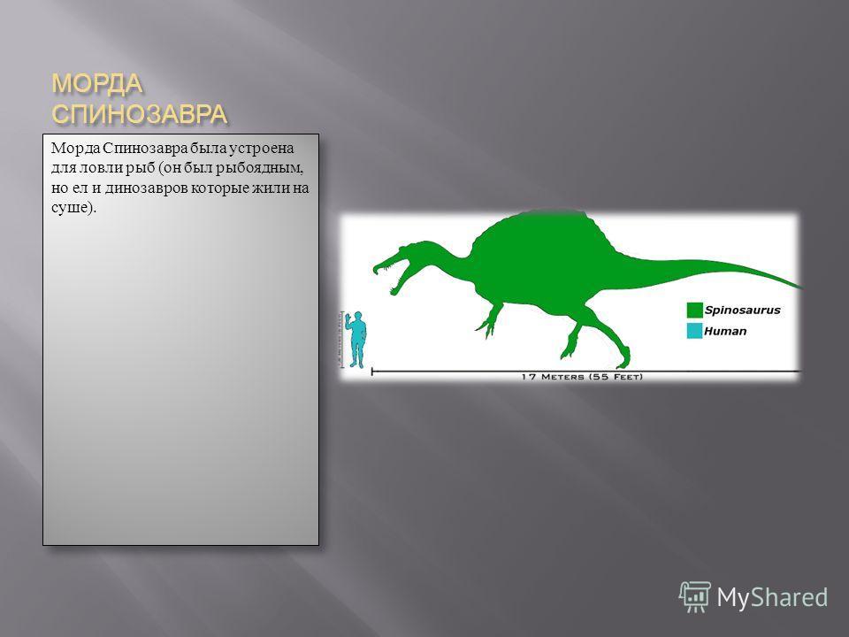 МОРДА СПИНОЗАВРА Морда Спинозавра была устроена для ловли рыб (он был рыбоядным, но ел и динозавров которые жили на суше).