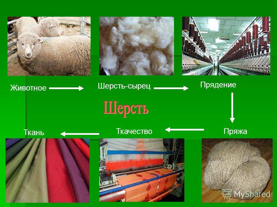 Животное Шерсть-сырец Прядение Пряжа Ткачество Ткань